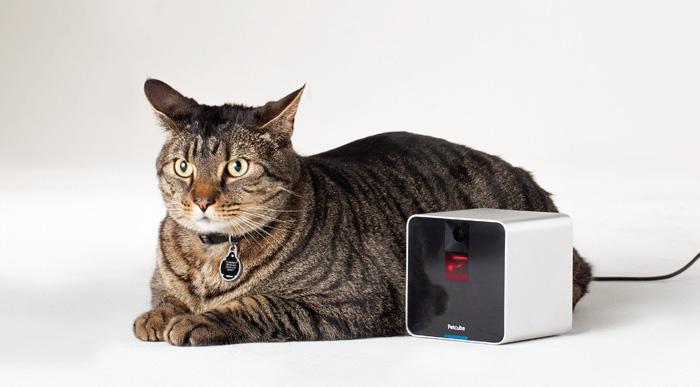 支援 Apple Watch !  |Petcube遙距與寵物玩遊戲