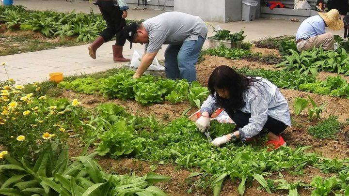 希慎廣場天台種菜大豐收  限量發售宣揚可持續發展