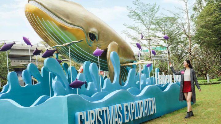 「 聖誕海洋尋寶之旅 」 8米長巨鯨現身北角歡樂暢泳