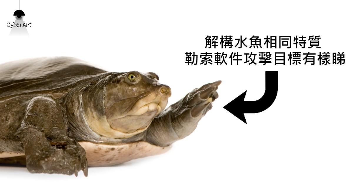 解構水魚特質 勒索軟件攻擊目標有樣睇